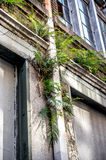 Costruzione abbandonata a New Orleans 2 Fotografie Stock