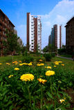 Costruzione con il crisantemo fotografia stock