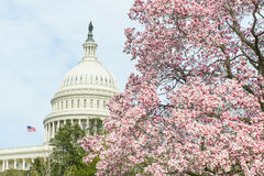 Costruzione del Campidoglio degli Stati Uniti in primavera, Washington DC, U.S.A. Immagine Stock