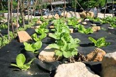 Costruzione del giardino convenzionale dell'erba e della verdura. Fotografia Stock Libera da Diritti