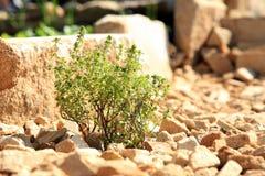 Costruzione del giardino convenzionale dell'erba e della verdura. Fotografia Stock