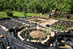 Costruzione del giardino convenzionale dell'erba e della verdura. Immagini Stock