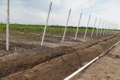 Costruzione dell'impianto di irrigazione Fotografie Stock