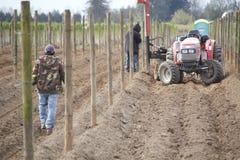 Costruzione delle poste per il raccolto del lampone Fotografia Stock Libera da Diritti
