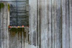 Costruzione di calcestruzzo invasa con muschio con pochi autunno caduto Fotografie Stock