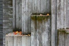 Costruzione di calcestruzzo invasa con muschio con pochi autunno caduto Immagini Stock Libere da Diritti