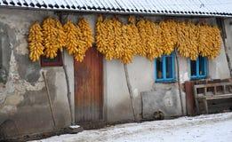 Costruzione economica su un'iarda rustica Fotografia Stock