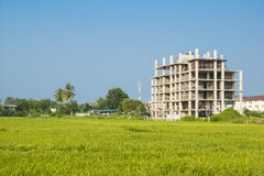 Costruzione ed il giacimento del riso Immagini Stock