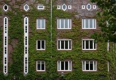 Costruzione Ivy-covered Fotografia Stock