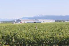Costruzione pratica della grande azienda agricola canadese Immagine Stock Libera da Diritti