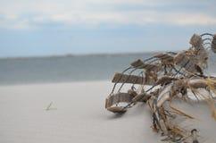 Costruzione sulla spiaggia immagine stock libera da diritti