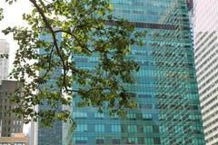 Costruzioni alte del grattacielo Fotografia Stock Libera da Diritti