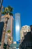 Costruzioni del grattacielo e palma alte Fotografia Stock Libera da Diritti