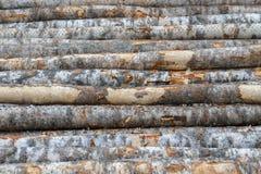 Costruzioni della costruzione della betulla del fondo di architettura Fotografie Stock