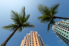 Costruzioni di appartamento e palme Fotografia Stock