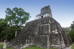 Costruzioni in Tikal, Guatemala del Maya Fotografia Stock Libera da Diritti