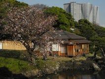 Costruzioni a Tokyo Fotografia Stock