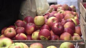 Costume che sceglie le mele rosse nel mercato della frutta e di verdura della città Compratore che seleziona le mele succose ross stock footage