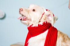 Costume de port de Noël de chien Année du concept de chien Photos libres de droits