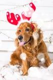 Costume de port de Noël de chien d'épagneul Année du concept de chien Image libre de droits
