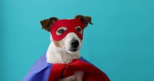 Costume de superh?ros de Russell de cric de chien banque de vidéos
