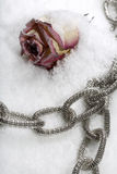 Costume jewellery and rose on ice in studio Royalty Free Stock Photos