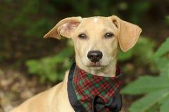Costume mignon de chien Photographie stock