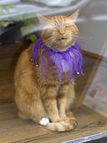 Costumed Cat in a Window Stock Image