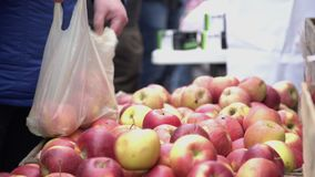 Costumer choosing red apples in city fruit and vegetable market. Buyer picking red juicy apples in farmers market.  stock footage