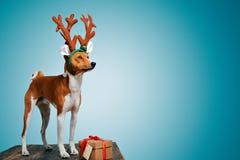 Costumes wering de Noël de beau chien Photos libres de droits