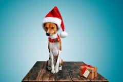 Costumes wering de Noël de beau chien Image stock