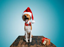 Costumes wering de Noël de beau chien Photo stock