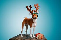 Costumi wering di natale del bello cane fotografie stock