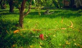 Cosy ogród i gumowy ogrodowy wąż elastyczny Obrazy Royalty Free