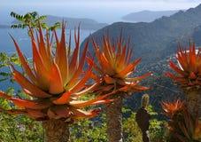 Cote d'Azur: kaktus i den exotiska trädgården arkivfoto