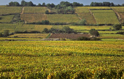 Cote d'Or hillside vineyards, Burgundy. Autumn color shows on Cote'dOr hillside vineyards, Burgundy Stock Photos