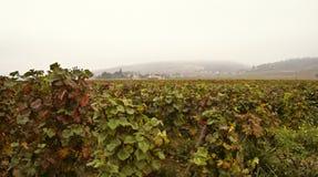 Cote d'Or vineyards, Burgundy. Misty morning on Cote d'Or, Burgundy royalty free stock images
