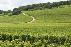 葡萄园在Cote de Nuits。 伯根地酒。 法国。 免版税图库摄影