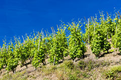 Cote Rotie, Rhone-Alpes, France Stock Images