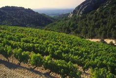 cotes de dentelles du montmarail证明的罗讷横谷葡萄园 库存照片