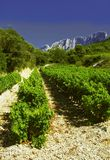 Cotes du rhone vineyards dentelles de montmarail vaucluse Stock Image