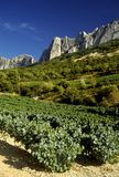 Cotes Du Rhone Vineyards Dentelles De Montmarail Vaucluse Proven Stock Photos