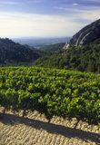 Cotes du rhone vineyards dentelles de montmarail vaucluse proven Royalty Free Stock Images
