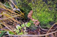 Coto com cogumelos de mel, no tempo chuvoso Vista de acima imagem de stock royalty free