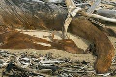 Coto curvado da madeira lançada à costa com mancha do ocre no lago flagstaff fotografia de stock royalty free