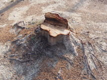 Coto da árvore Foto de Stock Royalty Free