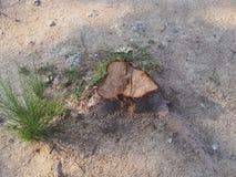 Coto da árvore Imagem de Stock Royalty Free