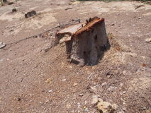 Coto da árvore Imagens de Stock