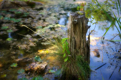 Coto da lagoa Fotos de Stock