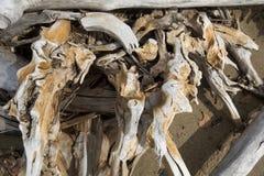 Coto da madeira lançada à costa com projeções torcidas no lago flagstaff, nort imagens de stock royalty free